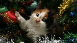 Котенок спрятался в новогодней елке