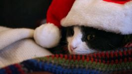 Черно-белый кот фото