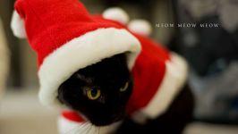 Черная кошка в новогоднем костюме