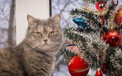 Кот около елки