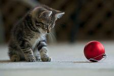 Котенок играет с елочным шаром