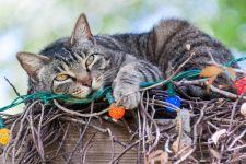 Кот лежит на елочной гирлянде