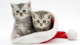 Серые котята в шапке Санта Клауса