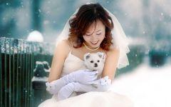 Японский шпиц и невеста