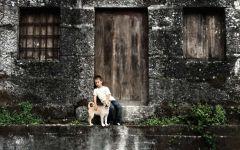 Мальчик и щенок шиба-ину
