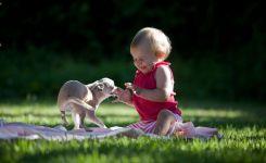 Чихуахуа - маленькая собака мира