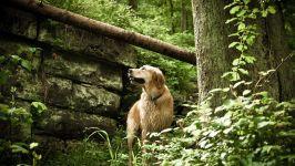 Ховаварт на прогулке по лесу