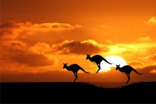 Скачущие кенгуру на фона заходящего солнца