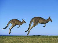 Прыгающие кенгуру