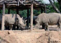 Носороги в зоопарке, Индонезия