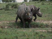Носороги краткое содержание