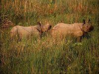 Носороги не водятся
