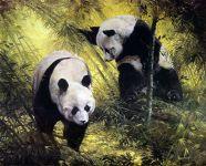 Панды китайские
