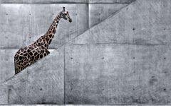 Жираф и серая стена