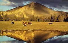 Пасущиеся коровы на фоне гор, Орегон