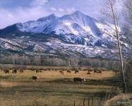 Пасущиеся на высокогорных лугах коровы