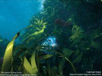 Морской леопард (Hydrurga leptonyx)