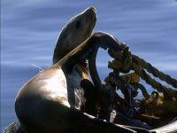 Морской лев греется на солнышке