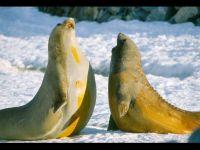 Ластоногие млекопитающие