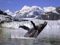 Горбатый кит википедия