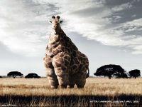 Толстый жираф