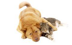 Собака и кошка лежат в обнимку
