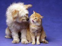 Собака и рыжий кот