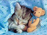 Спящий котенок и плюшевый мишка