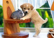 Рыжий щенок и карликовый кролик