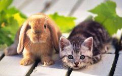 Кролик карликовый баран и котенок