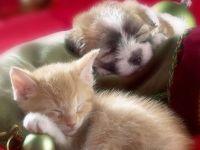 Спящие щенок и котенок