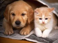 Картинка котенок и щенок, прикольное фото смешная