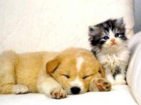 Щенок и котенок на белом диване, прикольное фото смешная