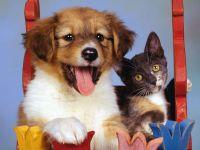 Щенок и котенок, прикольное фото смешная