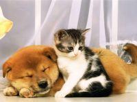 Рыжий щенок и котенок, прикольное фото смешная
