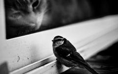 Кот, наблюдающий за птичкой, прикольное фото смешная