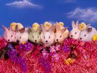Карликовые кролики и цыплята, прикольное фото смешная