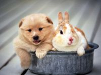 Щенок и карликовый кролик, прикольное фото смешная