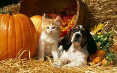 Щенок гончей и котенок около тыквы, прикольное фото смешная
