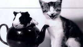 Котёнок и морская свинка в чайнике, прикольное черно-белое фото смешная