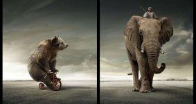 Медведь на велосипеде, погонщик на слоне, прикольное фото смешная