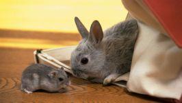Карликовый кролик и джунгарский хомячок, прикольное фото смешная