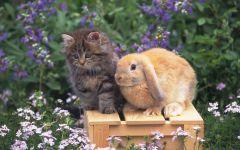 Котенок и баран (карликовый кролик), прикольное фото смешная