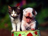 Маленький щенок и котенок, прикольное фото смешная