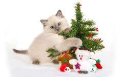 Голубоглазый котёнок с новогодней елочкой