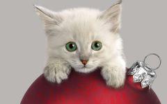 Котенок лежит на елочном шаре
