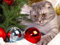 Кот играет с новогодними шарами