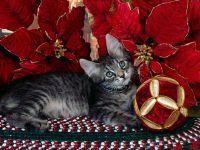 Котенок с елочными украшениями