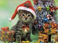 Котенок около новогодней елки