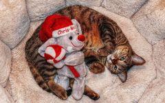 Кошка и медвежонок Тэдди